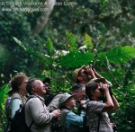 Birding in Bwindi among the ancient tree ferns © Deirdre Vrancken & Callan Cohen www.birdingafrica.com